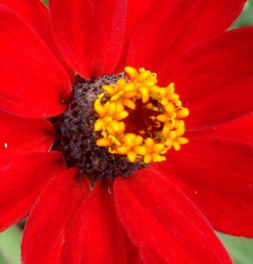 fleur 12