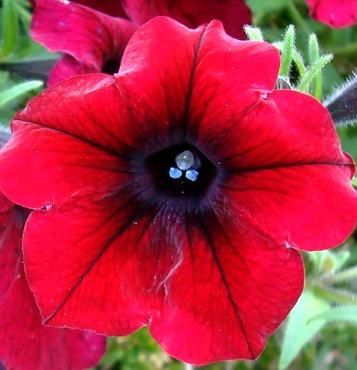 fleur 9