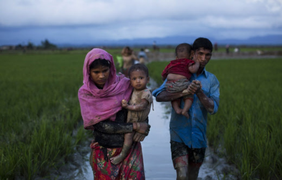 960x614_refugies-rohingyas-marchent-champs-riz-apres-avoir-franchi-frontiere-bangladesh