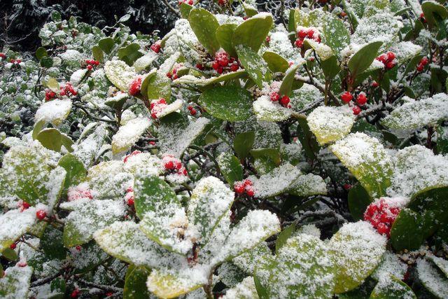 neige 5