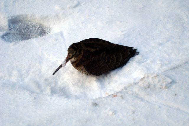 edimbourg neige 8