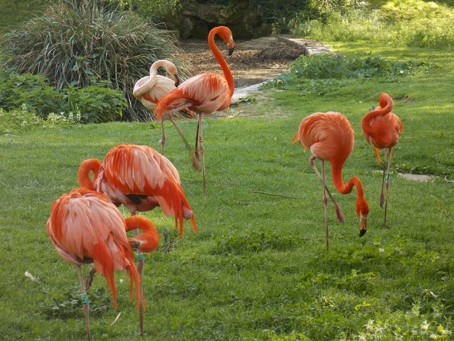 flamants roses 3