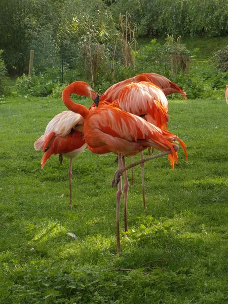 flamants roses 9