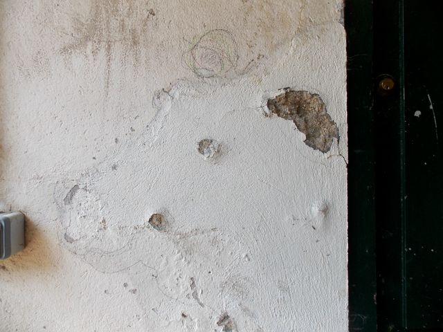 Quelqu'un a gravé dans les reliefs du mur du souterrain du jardin des Plantes qui mène au Jardin alpin des formes d'animaux, comme le faisaient nos ancêtres préhistoriques dans les grottes. Ces jours-ci à Paris, photo Alina Reyes