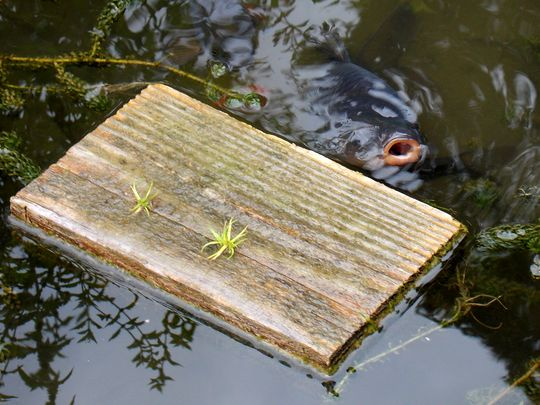jardin des plantes 10 poisson