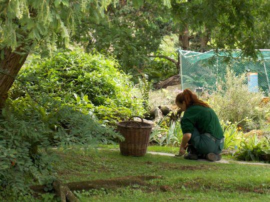jardin des plantes 15 jardiniere