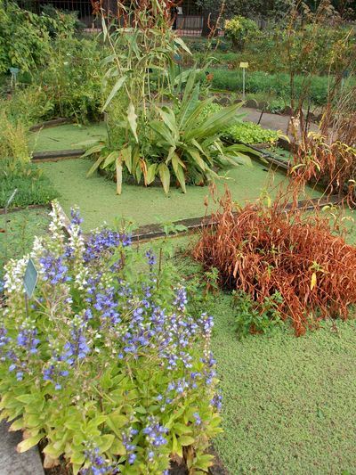jardin des plantes 5 bassin