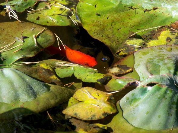 au jardin 4 poisson