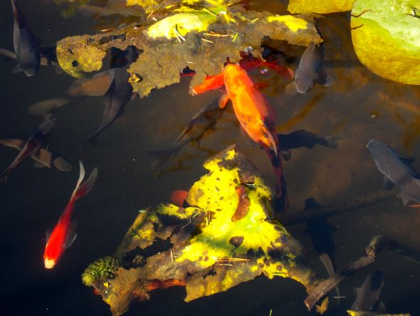 au jardin 5 poissons