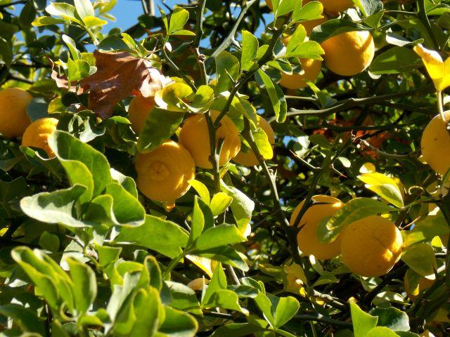 jardin 1 oranger