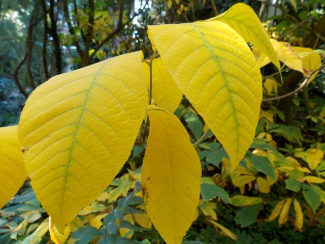 jardin 3 feuilles jaunes