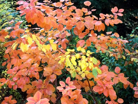 feuilles-min