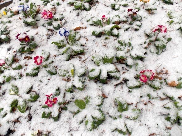 neige 1-min