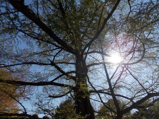 arbre 1-min