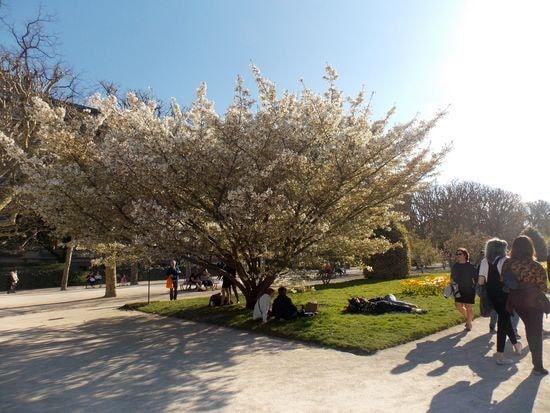 arbre 11-min