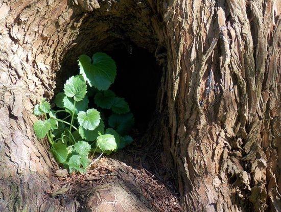 arbre 3-min