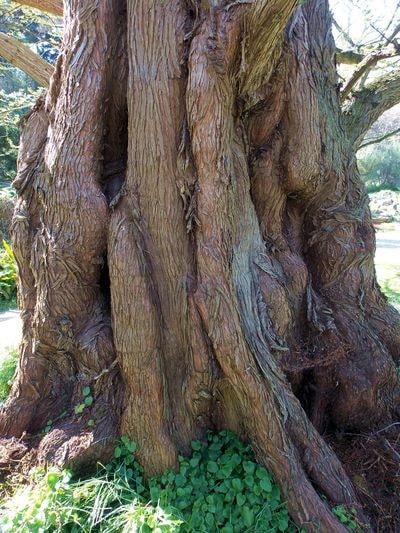 arbre 4-min