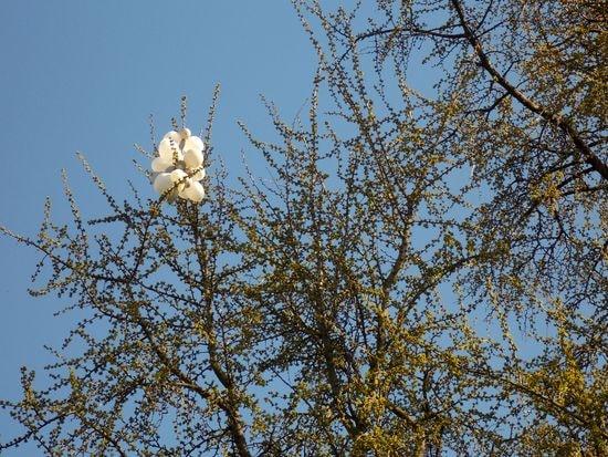 arbre 6-min