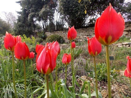 jardin 9-min