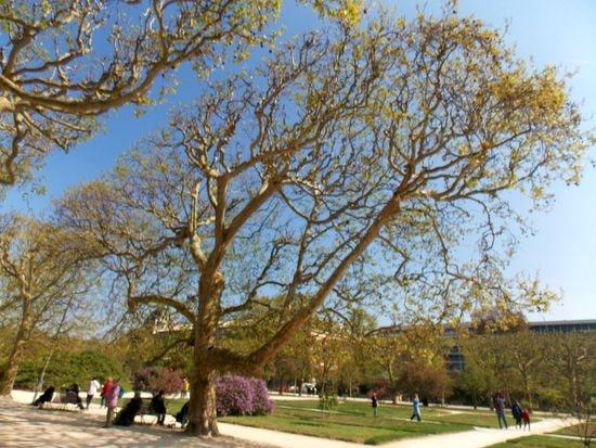 arbres 2-min