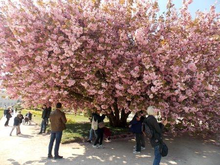 arbres 3-min