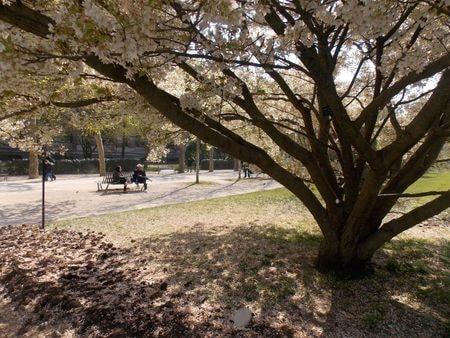 arbres 4-min