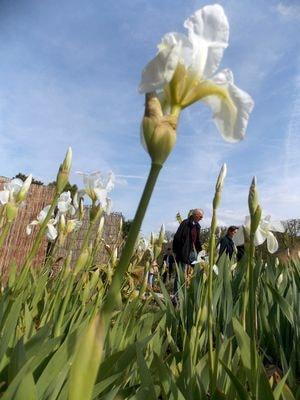 Cet après-midi au Jardin des Plantes, photos Alina Reyes