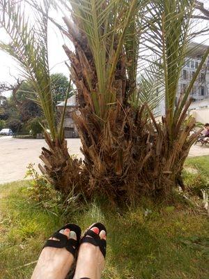 jardin palmier-min