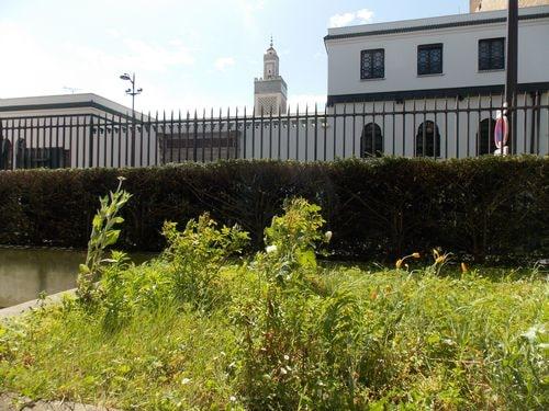 Cet après-midi à l'entrée de la bibliothèque du Museum côté rue, photo Alina Reyes