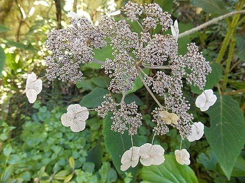 fleurs et plantes 11-min