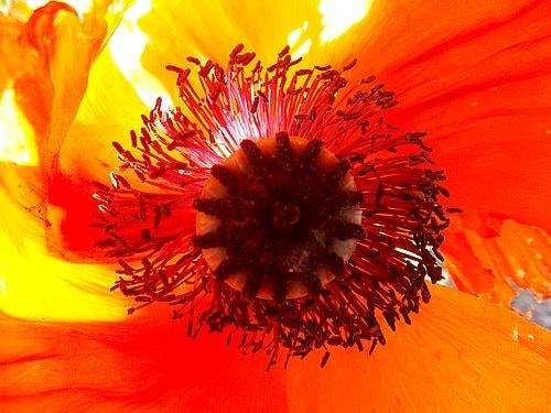 fleurs et plantes 2-min