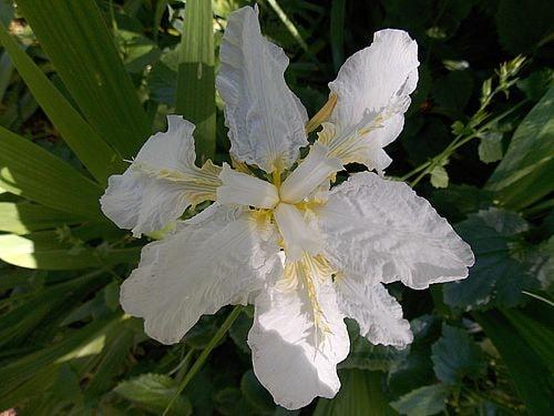 fleurs et plantes 9-min