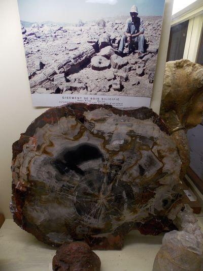 Il n'y a pas que les os de dinosaures que le long temps transforme en pierre (cf note précédente), les arbres aussi
