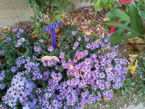 jardin d'abel 8-min