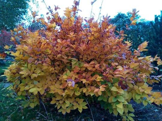 automne 1-min