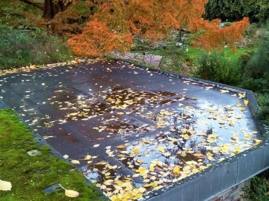 automne 3-min