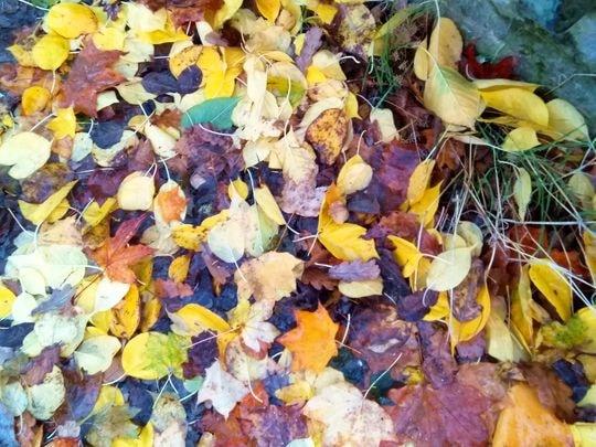 automne 4-min