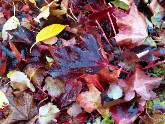 automne 5-min
