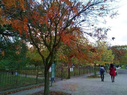 automne 6-min