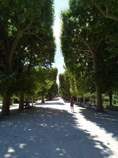 au Jardin des plantes ces jours-ci, photo Alina Reyes