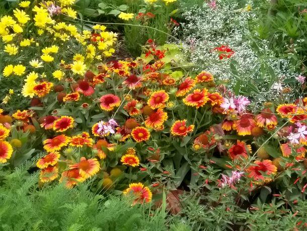 Aujourd'hui au jardin des Plantes, photo Alina Reyes