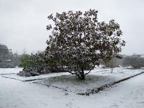 neige 5-min