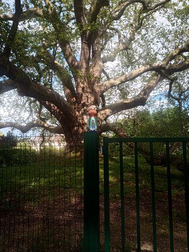 arbre de diane 2-min