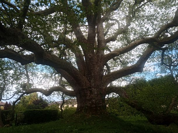 arbre de diane-min